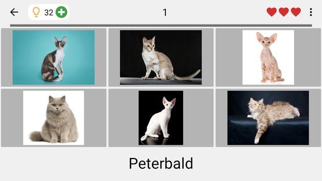 Cats Quiz screenshot 13