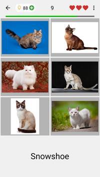 Cats Quiz screenshot 1