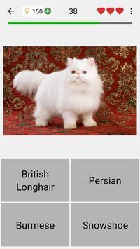 Cats Quiz screenshot 3