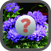 Guess the Flower icon