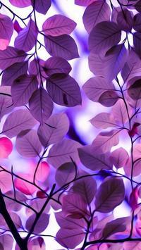 Beautiful Wallpaper स्क्रीनशॉट 1