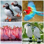 Guess Bird icon
