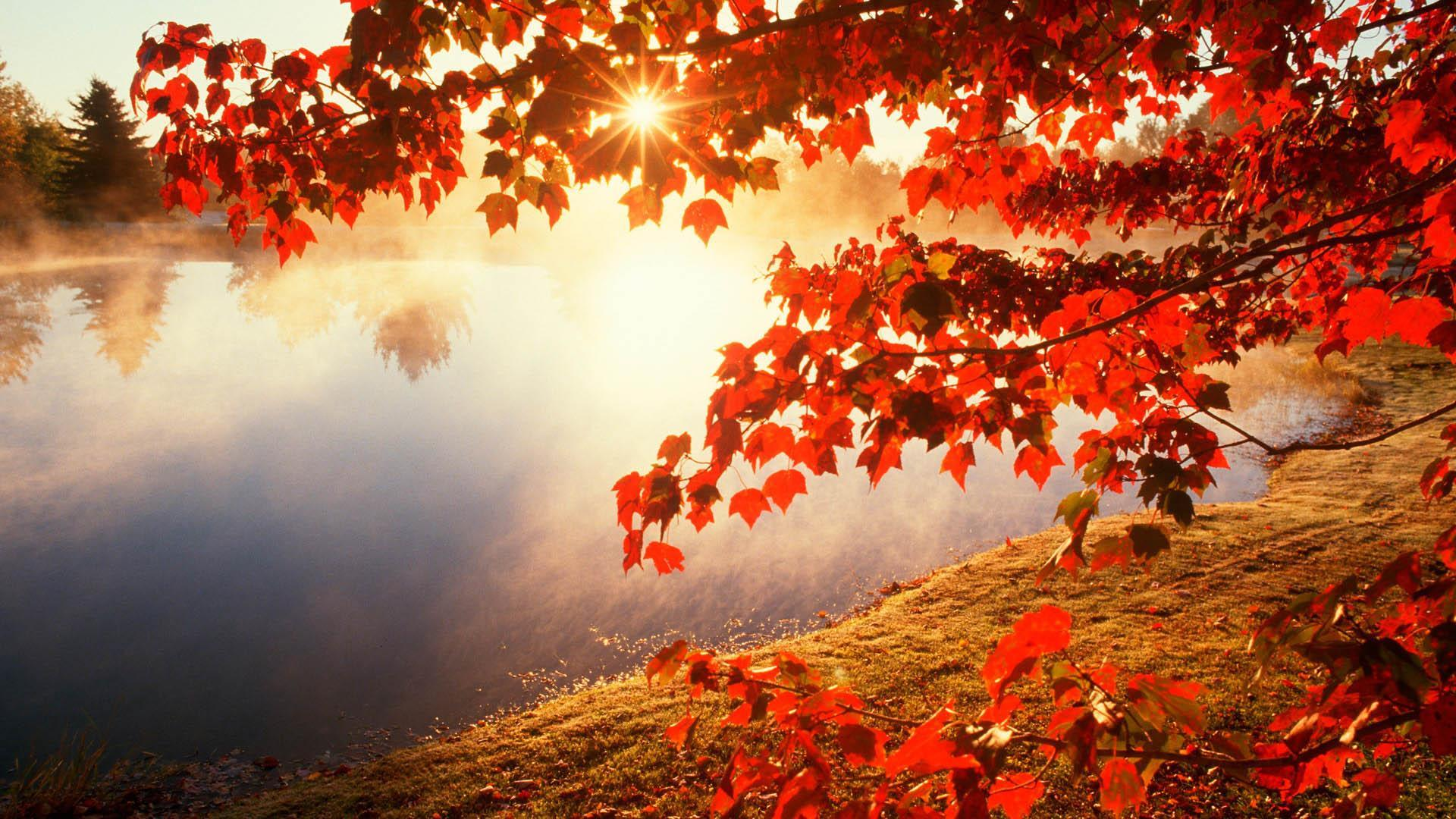 Autumn Wallpapers For Android Apk Download