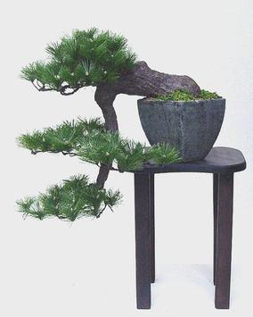Beautiful Bonsai Design screenshot 1