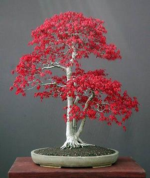 Beautiful Bonsai Design screenshot 2