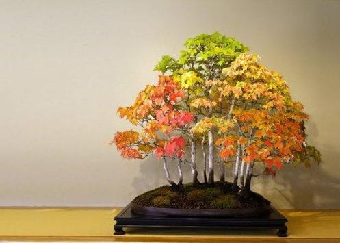 Beautiful Bonsai Design screenshot 4
