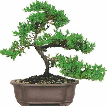Beautiful Bonsai Design screenshot 5