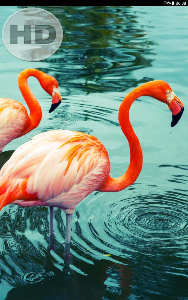 Bird Wallpaper Free Download For Android Apk Download