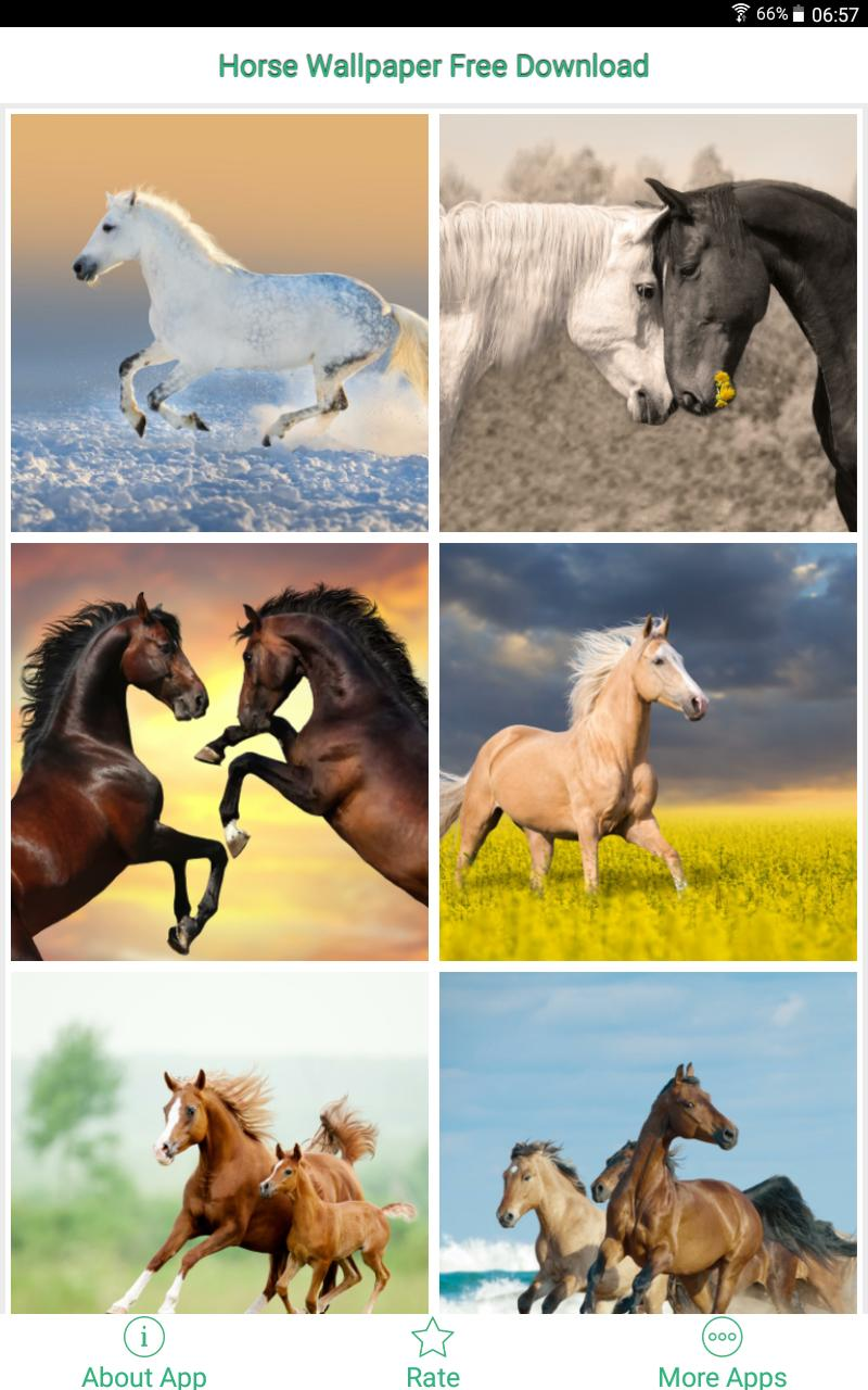 Horse Wallpaper Free Download For Android Apk Download