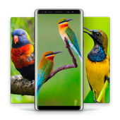 HD Best Birds Wallpaper 4K - Mobile Themes icon