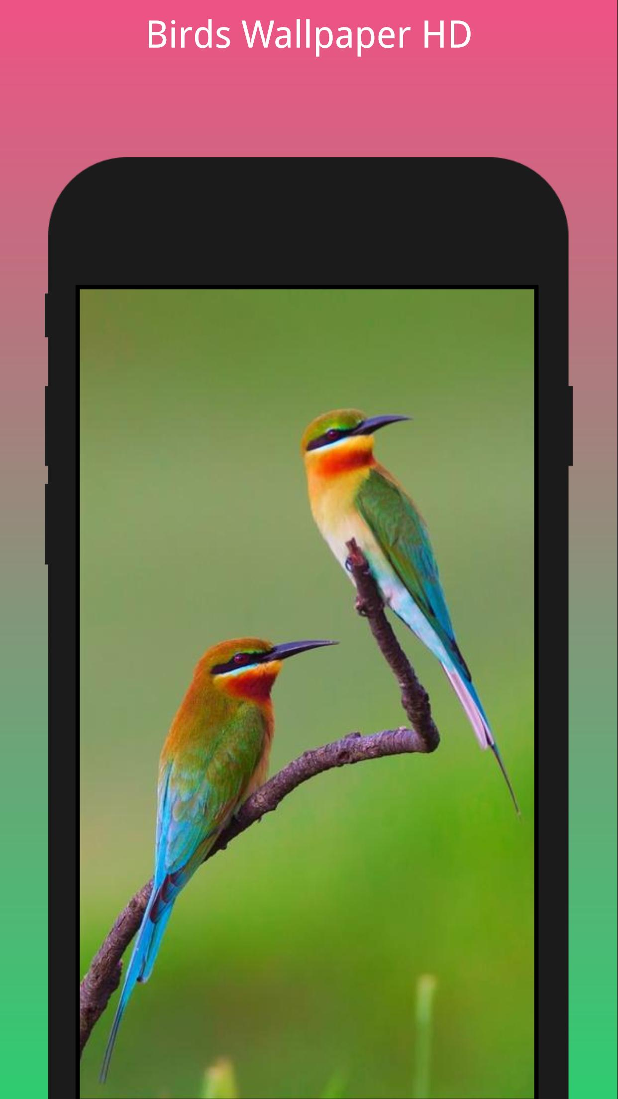 Hd Best Birds Wallpaper 4k Mobile Themes For Android Apk Download