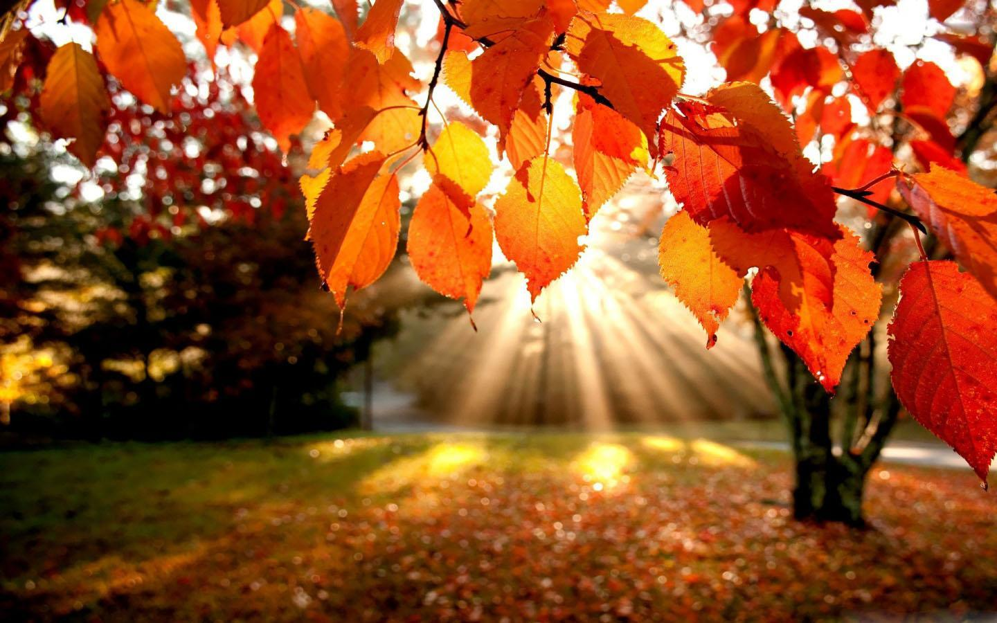 Romantic Autumn Wallpapers For Android Apk Download