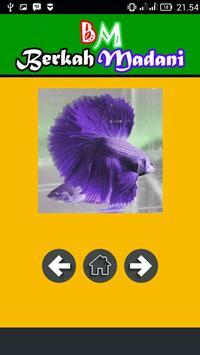 400++ Betta Fish screenshot 3