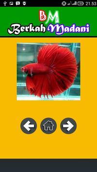 400++ Betta Fish screenshot 1