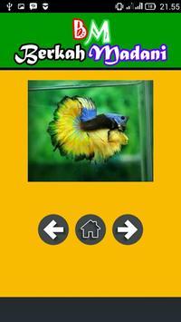 400++ Betta Fish screenshot 2