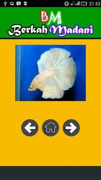400++ Betta Fish screenshot 4