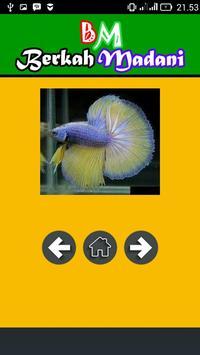 400++ Betta Fish screenshot 5