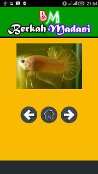 400++ Betta Fish screenshot 6