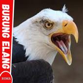 58 Foto Gambar Burung Elang Keren HD Paling Unik Free