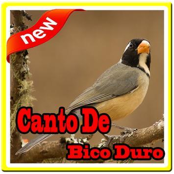 Canto De Bico Duro poster