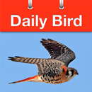 Daily Bird APK
