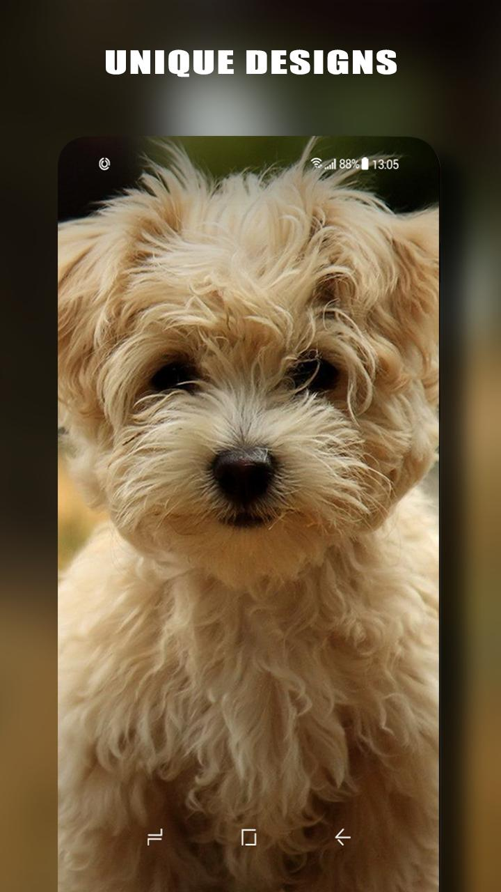 Wallpaper Anjing Lucu Gratis For Android APK Download
