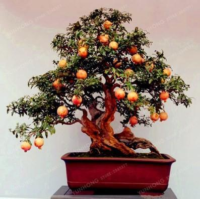 Bonsai Tree Types for Android - APK Download