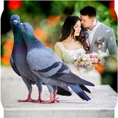 Love Bird Photo Frames icon