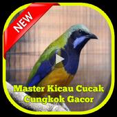 Master Kicau Cucak Cungkok icon