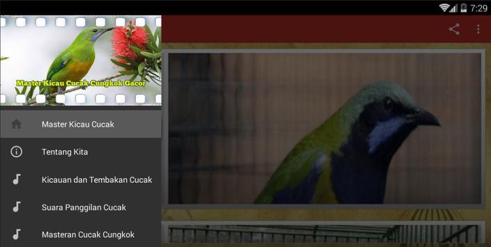 Master Kicau Cucak Cungkok screenshot 5