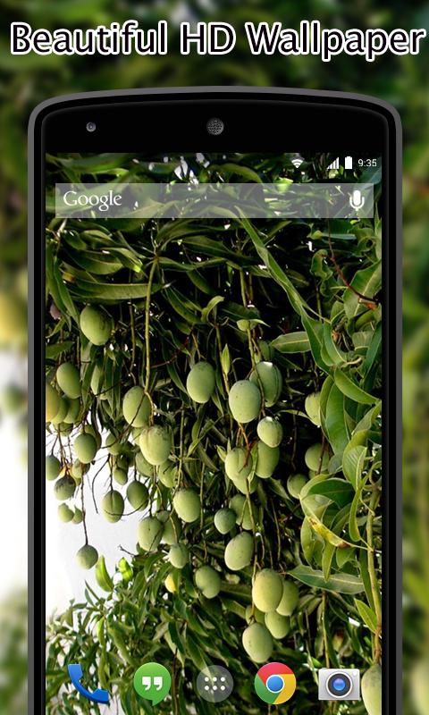 Fruit Tree Wallpapers Hd For Android Apk Download