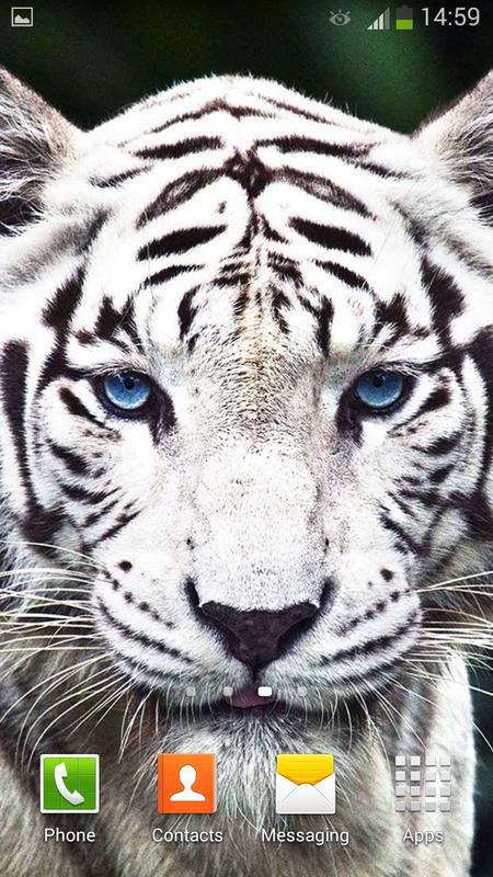 7c678d305fa52 Tigre Blanco Fondo Animado for Android - APK Download