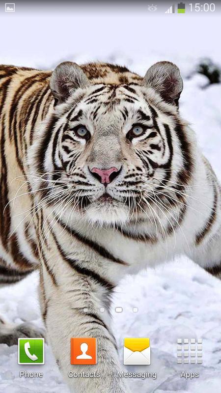 dfe180165ef80 ... Tigre Blanco Fondo Animado captura de pantalla 7 ...