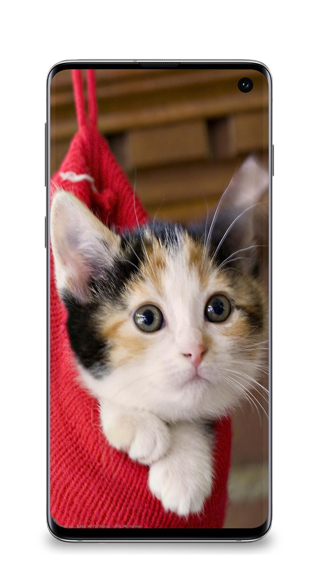 Cute Cat Wallpapers Hd For Android Apk Download