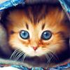 القطط لطيفه خلفية متحركة أيقونة