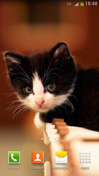 Cute Cats Live Wallpaper screenshot 3