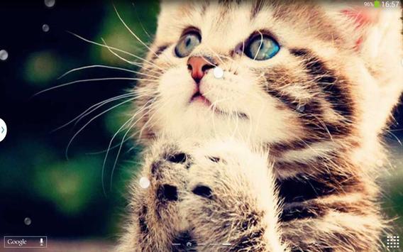 Cute Cats Live Wallpaper screenshot 11