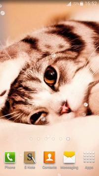 Cute Cats Live Wallpaper screenshot 13