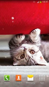 Cute Cats Live Wallpaper screenshot 1