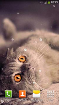 Cute Cats Live Wallpaper screenshot 5