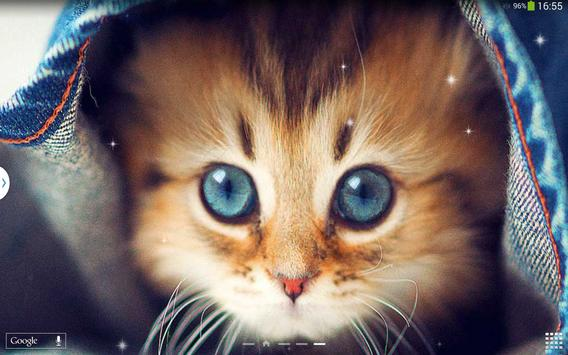 Cute Cats Live Wallpaper screenshot 8