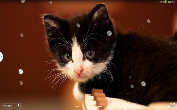 Cute Cats Live Wallpaper screenshot 9