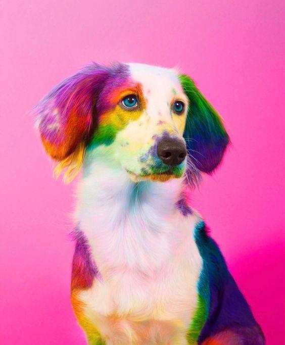 Cute Dogs Wallpaper Pour Android Telechargez L Apk