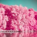 AnalogFim粉色相机 - 调色板,照片编辑器,巴黎,伦敦,东京,纽约 APK