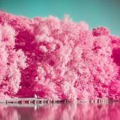 AnalogFim粉色相机 - 调色板,照片编辑器,巴黎,伦敦,东京,纽约 图标