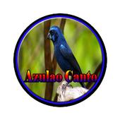 Azulao Canto Brasileiro Comple icon