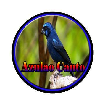 Azulao Canto Brasileiro Comple poster