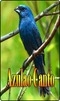 Azulao Canto Brasileiro Comple screenshot 5