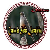 ikon Canto de Sabia Laranjeira