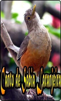 Canto de Sabia Laranjeira 스크린샷 3